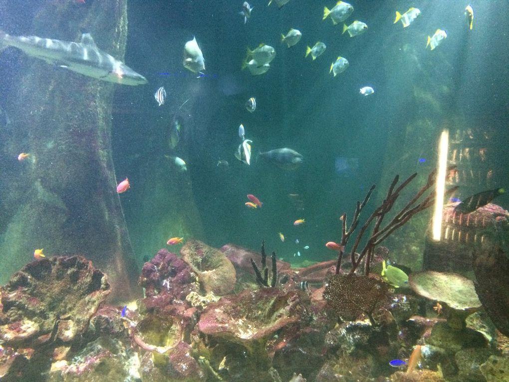Bray, L' aquarium, Jeanie Johnson Ship, Samuel Beckett Bridge