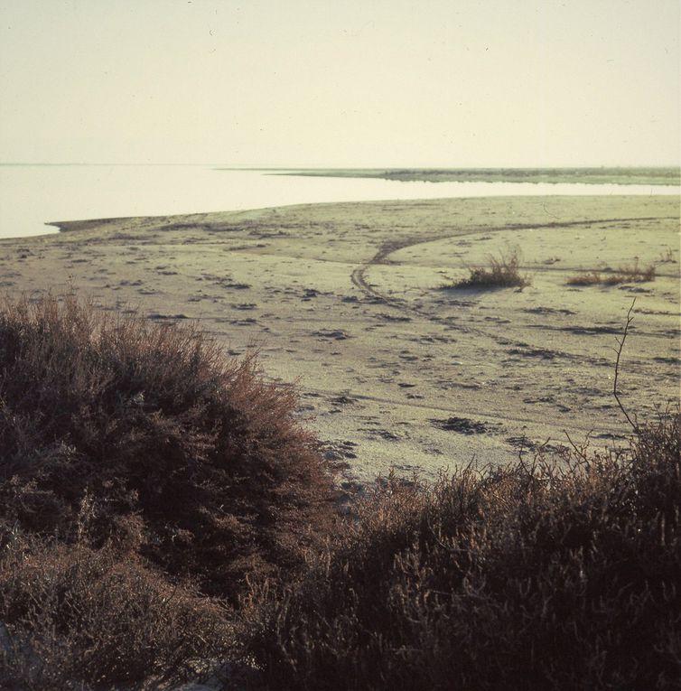 Dans les années 2000, de gros travaux de protection contre l'érosion du littoral ont été entrepris. Le bord de l'étang est aujourd'hui bordé par une dune, les tamaris, et toutes les plantes des sables y foisonnent, libèrent leur parfum.