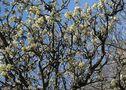 Trucs et astuces - Boostez les fruitiers vieillissants