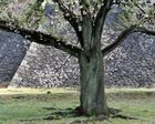 Spring of the Imperial Palace3