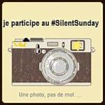 Silent Sunday #6