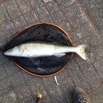 Fishing Belgium 2015 : Big Zander ... mon nouveau record ! (27/03/15)