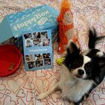 HappyBox par Holidog Ouverture à venir...