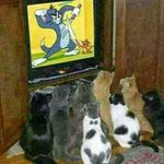 Tom and Jerry Fighting