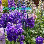 Préparer l'Automne au Jardin avec Hortiflor Bureau