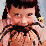 En moyenne, durant une vie, on avale 70 insectes et 10 araignées lorsqu'on dort ! #lundisoleil