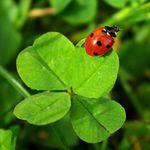 Rappel : Rituel de la chance