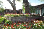 Istanbul : arbres et fleurs de Topkapi