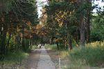 Istanbul : Mobilisation des amoureux des arbres