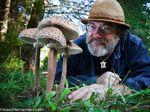 Paul Stamets : Six champignons pour sauver le monde (Conf. Ted 2008)[VOSTFR]