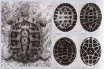 Lauterwasser : résonnance et création (Doc) [VF]