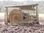 Piétinement des pâturages et fertilité du sol