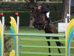 Mon cheval a un problème de foie : vrai ou faux ?
