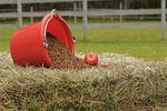 Journée de Nutrition Equine dans les Deux-Sèvres
