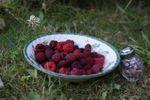 Em Liorzh - Dans mon jardin