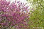 Canopée fleurie