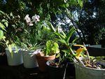 un jardin tropical fleuri