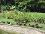 1878 : ces animaux qui investissent le jardin public (article 3/7)