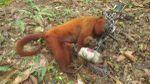 Chroniques Guyanaises, dernier jour en forêt, 22 mars 2015