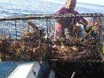 Pescadores cubanos: Seis meses sin cobrar moneda convertible