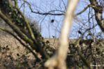 Chevreuils en vue