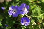 Lundi fleuri