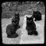 Il gatto nero: storia e magia