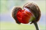 12/11/2015 : Sénat/ Commission/ Avis sur le budget biodiversité