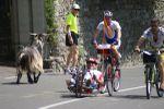 100 km del Passatore 2016 (44^ ed.). Quali gli eventi collaterali, alla vigilia e durante la gara