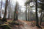 Le menhir du Kuhbergkopf