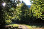 Randonnée autour du Donon, du Kohlberg et du Petit Donon
