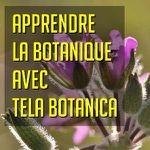 Apprendre la botanique tous ensemble !