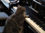 videos: Nora, un chat virtuose au piano+ chat baigne + lapin vs poulet
