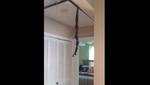 """Il voit un """"câble"""" pendre du plafond: la vérité est bien plus horrible"""