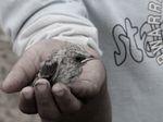 Biodiversité en Algérie: l'enfant pauvre de l'écologie algérienne