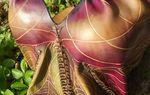 Bustiers en cuir modelés  Collection Esprit  Nature