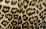 Tendance léopard !