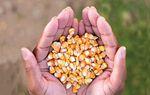 Partout dans le monde, les femmes sont à la tête du mouvement contre l'agriculture industrielle