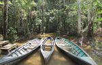 Un petit tour en Amazonie