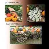 AU PAYS DES COURGES - CITROUILLES - POTIRONS - POTIMARRONS - - CLG Création Version 2.0