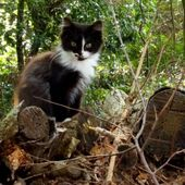 A ADOPTER : 2 jolies petites chattes -