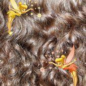 Le Blog pour les Chevelures Bouclées par Dame Nathalys