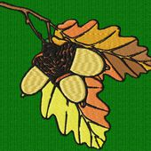 feuilles et glands de chêne