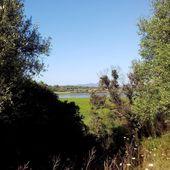 Vagues...Les Randonneurs de Skikda : Prospection dans la Zone Humide de Guerbaz (89) - srigina
