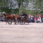 Carriage driving show in Lunéville - inandaroundlorraine.over-blog.com