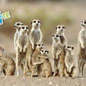 Soyons tous des suric@tes ! - Les Randonneurs Buxéens