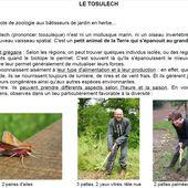 Mais qu'est ce donc qu'un ToSuLeCh ??? - tosulech.over-blog.com