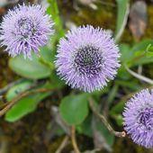 25 avril 2015 (suite) les Brotteaux d'Oussiat - Naturalistes du Bugey