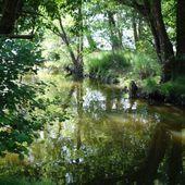 Courant du Huchet du Lac de Léon à Moliets-et-Maâ ( Landes 40 ) AA Balade / Rando - ONVQF.over-blog.com