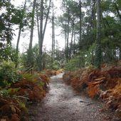 Tour de l'étang de Moliets ( Landes 40 ) AA Balade - ONVQF.over-blog.com